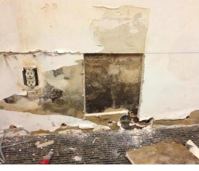 Mold damage in Orlando