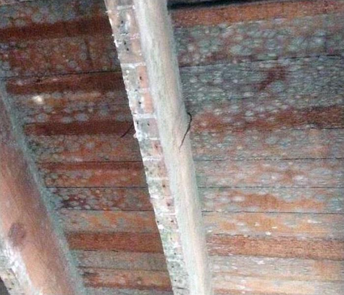 Mold in ceiling rafters