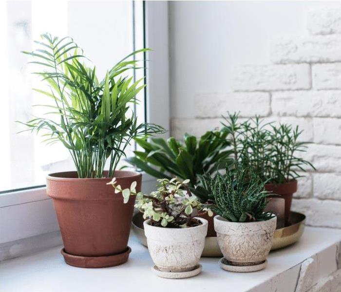 Houseplants in Tampa with mold growth